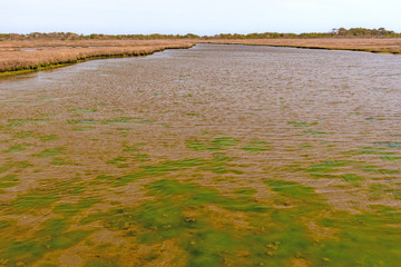 Colorful Estuary on a Barrier Island