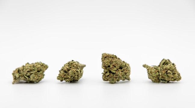 Multiple marijuana buds on white background