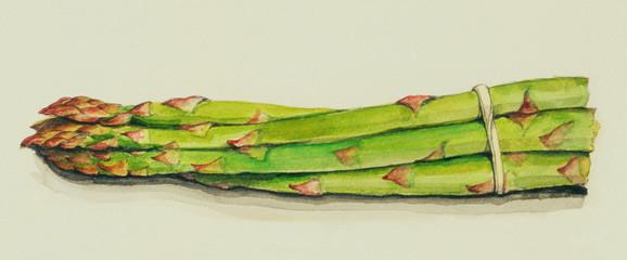 手描きイラスト グリーンアスパラガスの水彩画