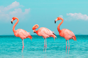 Tuinposter Flamingo Vintage and retro collage photo of flamingos standing in clear blue sea with sunny sky summer season with cloud.
