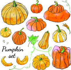 Deurstickers Vogels in kooien Collection of bright orange autumn pumpkin doodles. Fall harvest. Vector stock set. Cute icons with watercolor texture. Can be used for printed materials. Hand drawn. Halloween, thanksgiven.