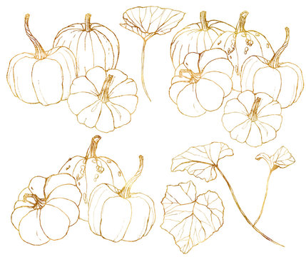 Vector golden pumpkins set for autumn harvest festival. Hand painted traditional pumpkins with leaves and branches isolated on white background. Botanical line art illustration for design, print.