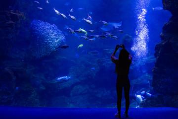水族館と人のシルエット