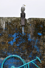 Seagull standing on the rustic wall. Old wall texture and vintage bicycle