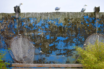 Seagulls standing on the old backyard wall. Rustic wall texture. Garden detail