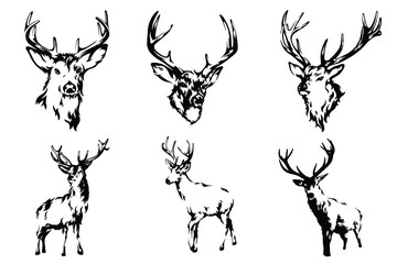 Deer vector black and white hand drawn illustration.