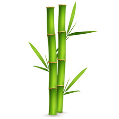 Realistic bamboo sticks with leaves and shadow