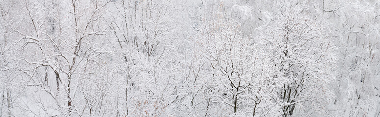 panorama of the forest