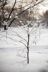 small tree in winter forest