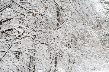 tree branches in the snow