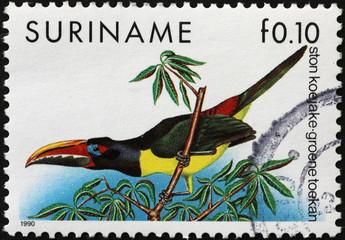 In de dag Toekan Colorful toucanet on postage stamp of Surinam
