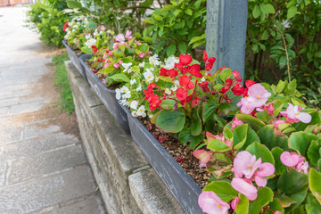 Pink and red planted flowers along a street, Perry road, Shimoda, Shizuoka, Japan