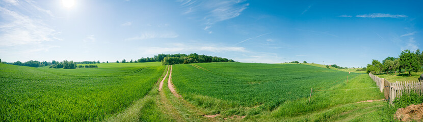 Photo sur Aluminium Pistache Panorama of summer green field. European rural view. Beautiful landscape of wheat field and green grass with stunning blue sky and cumulus clouds in the background.