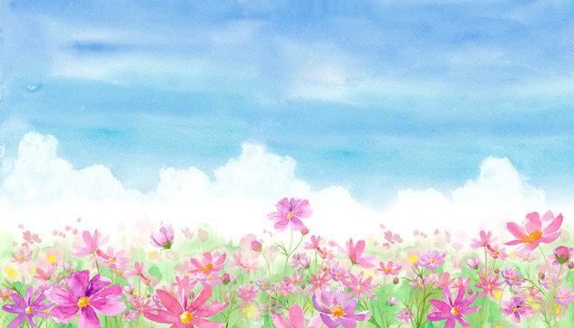 青い空とコスモス畑の風景、水彩イラスト