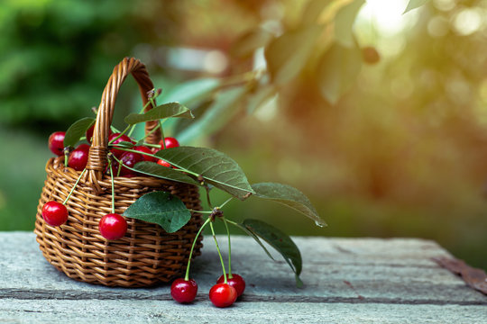 Wicker basket wooden table. A bunch of cherries dropped from the basket.