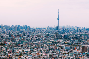 Aerial view Tokyo Skytree and buildings in residential area of Edogawa district. Tokyo - Japan