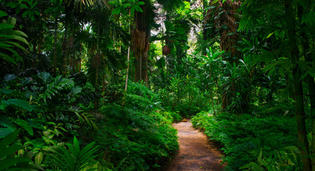 Poster de jardin Bambou Southeast Asian tropical rainforest with path