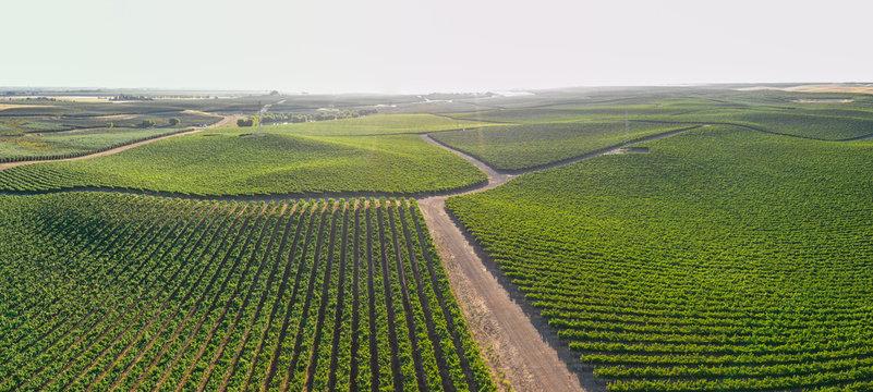 Vineyards scenics panorama aerial view