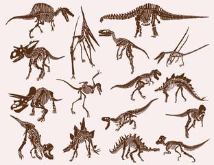 Vintage set of  dinosaur skeletons ,graphical vector illustration