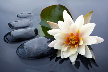 Fotobehang Waterlelies Spa still life with water lily and zen stone in a serenity pool