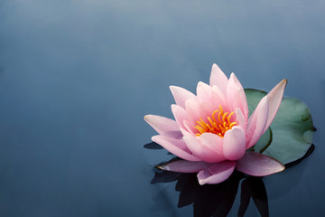 Fotorolgordijn Lotusbloem Beautiful pink lotus or water lily flowers blooming on pond