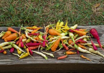 Backyard Garden Rainbow Carrots on Wood Surface