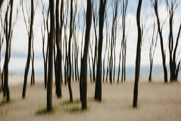 Blurred motion of elm trees on beach