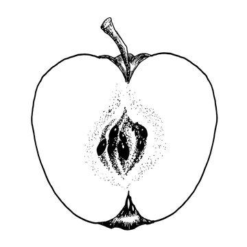Apple Line Art