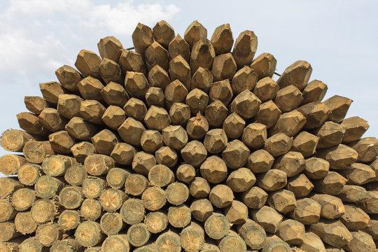 Pile of cut lumber against sky