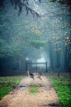 Deer standing in front of gate in park