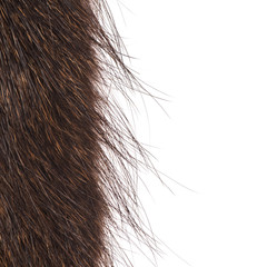 fur nutria closeup isolated on white background