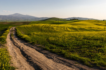 Beautiful Tuscany landscape in spring time with wave hills, a road and flowers on the foreground. Tuscany, Italy, Europe