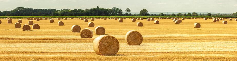 Foto auf AluDibond Melone Strohballen auf dem Feld