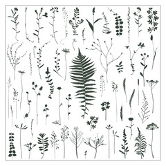 Vector silhouettes collection. Set of field flowers and herbs.