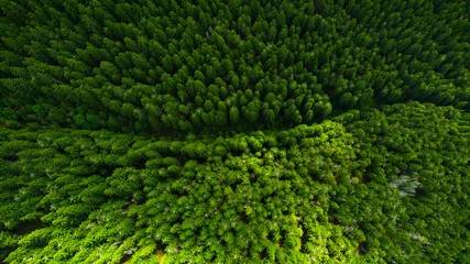 Wall Murals Northern Europe Aerial view of mountains covered with coniferous forests