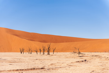 Deurstickers Droogte Dead Trees against against the red backdrop of the towering sand dunes of Namibia's Deadvlei