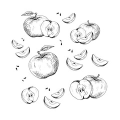 Apple set. Collection of hand-drawn black apple and apple slices, isolated on white background. Sketch style illustration.