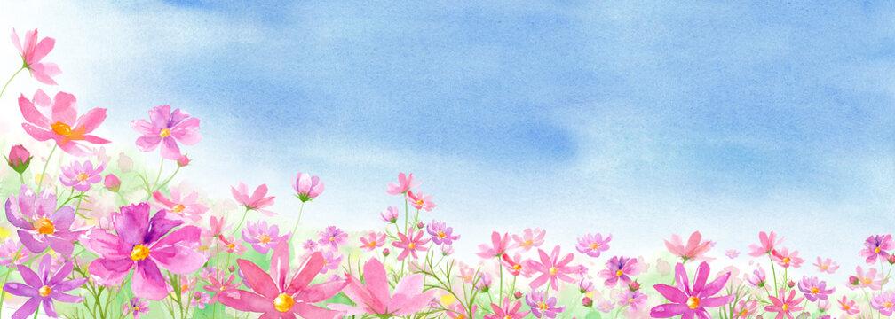 満開のコスモス畑と青空の背景アシンメトリー 水彩イラスト