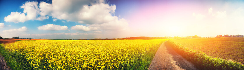 Tuinposter Cultuur Panoramic summer landscape with rapeseed field