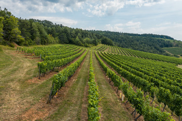 Above the vineyard of burgundy in France