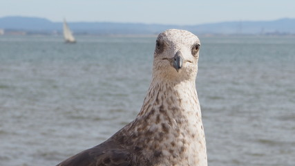 a cute seagull by the river
