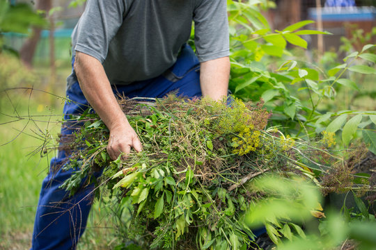 Senior man cleaning garden from a weed, gardening concept