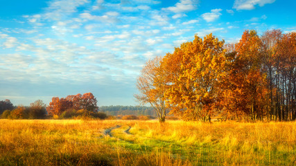 Autumn nature. October landscape on sunny bright day. Colorful trees on beautiful meadow in morning
