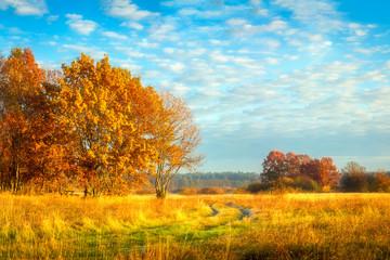 Fond de hotte en verre imprimé Piscine Beautiful autumn landscape. Yellow foliage on trees. Fall. Autumnal meadow with colorful trees.