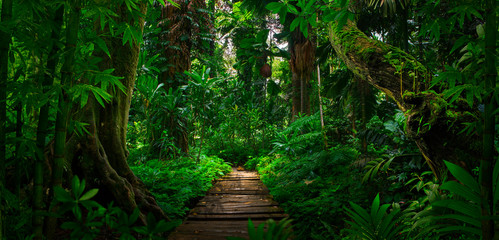Photo sur Aluminium Route dans la forêt Southeast Asian tropical rainforest with path