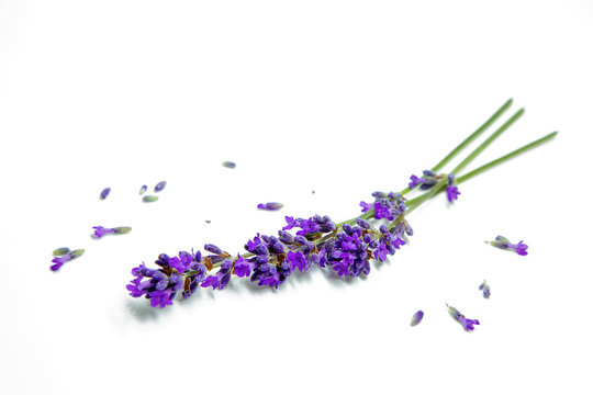 Flowers of lavander, background with flowers