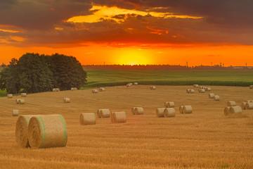 Fotoväggar - Sommer, Kornfeld, Landschaft mit Sonnenuntergang