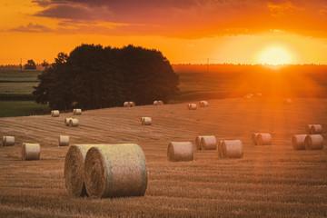 Fotoväggar - Sommer, abgeerntetes Kornfeld, Landschaft mit Sonnenuntergang