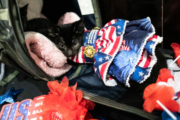 Figaro wears a dress inspired by an American flag at backstage before the Algonquin Hotel's Annual Cat Fashion Show in the Manhattan borough of New York City