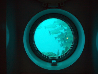 School of fish in the round submarine porthole